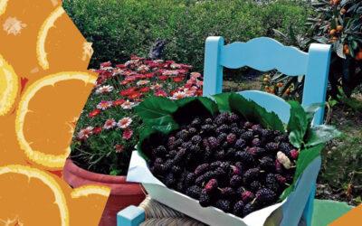 BASES: II Concurso de Fotografía «Productos de la Huerta Alhaurina» en honor a San Isidro Labrador