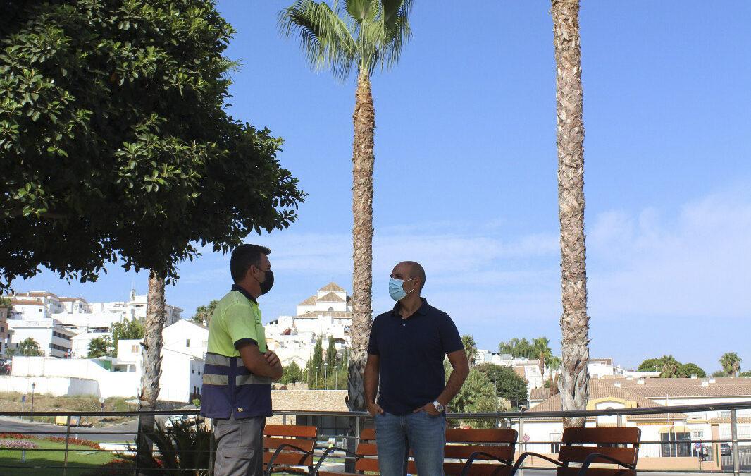 Comienza la segunda fase de la campaña de poda de palmeras 2021